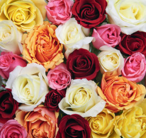 roses_100414_01
